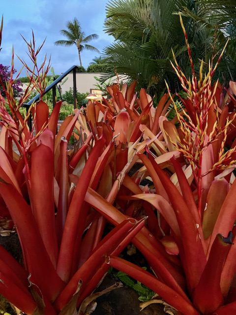 red plants