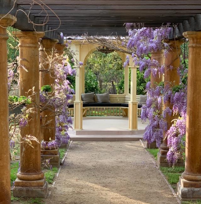 gazebo wisteria